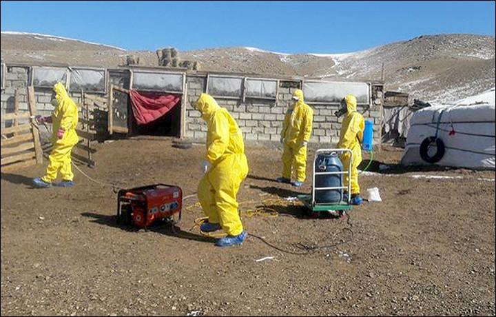 Российские туристы застряли из-за бубонной чумы в Монголии